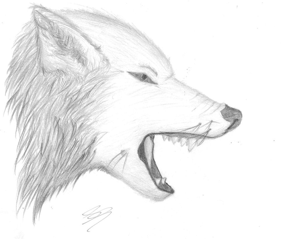 Drawn wolf Wolf Nyetitall on Nyetitall by