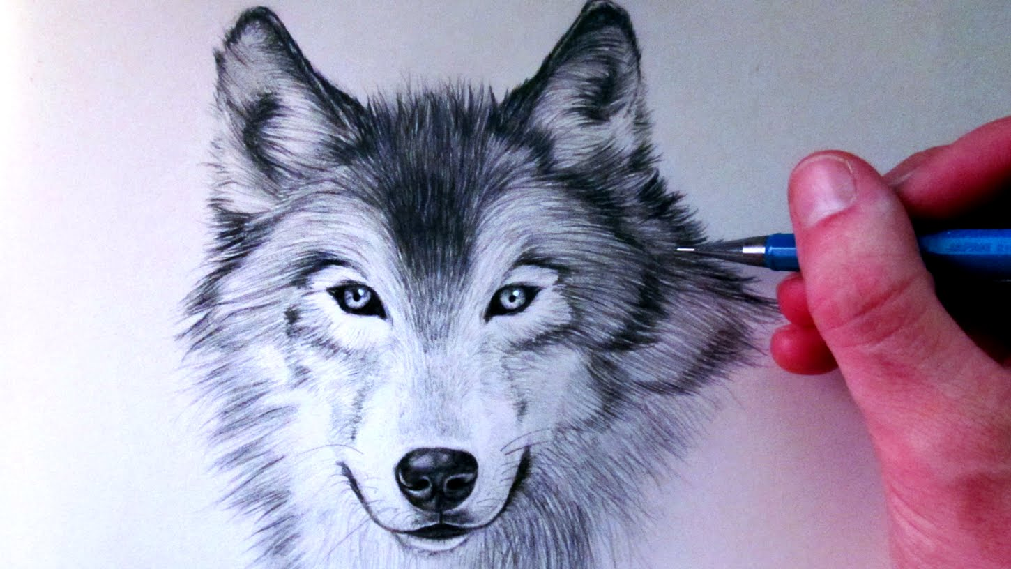 Drawn pen wolf A Wolf to Draw YouTube