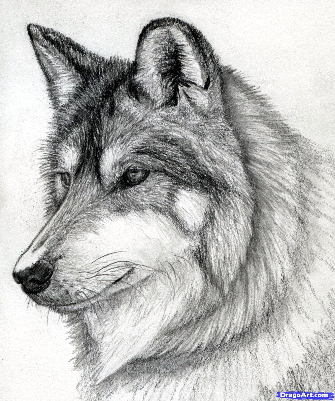 Drawn werewolf pencil drawing 15 wolf wolf a step