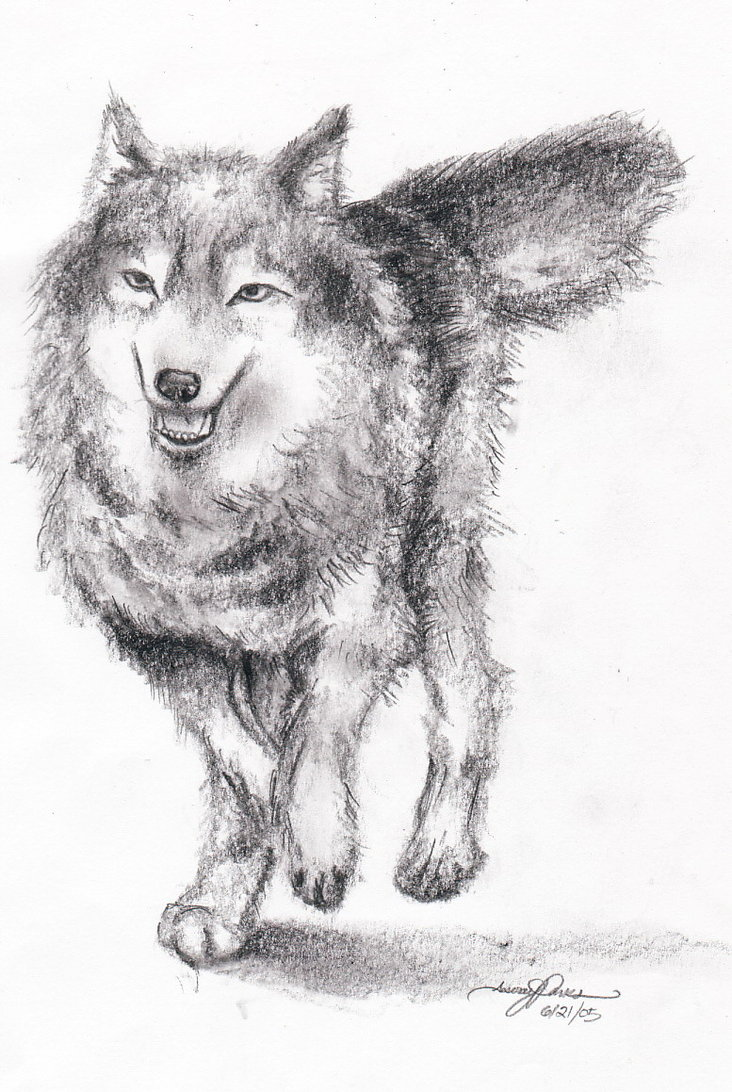 Drawn photos wolf DeviantArt by by on Aim4Beauty