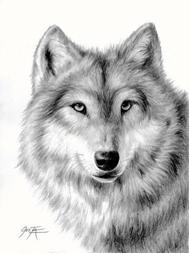 Drawn amd wolf Wolf by Wolf 2ndMoon pencil
