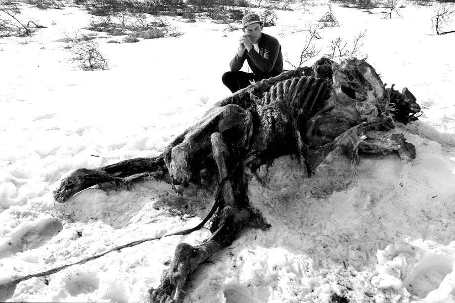 Drawn wolfman bear Dessicated carcass The Lycanthropy: Alaska