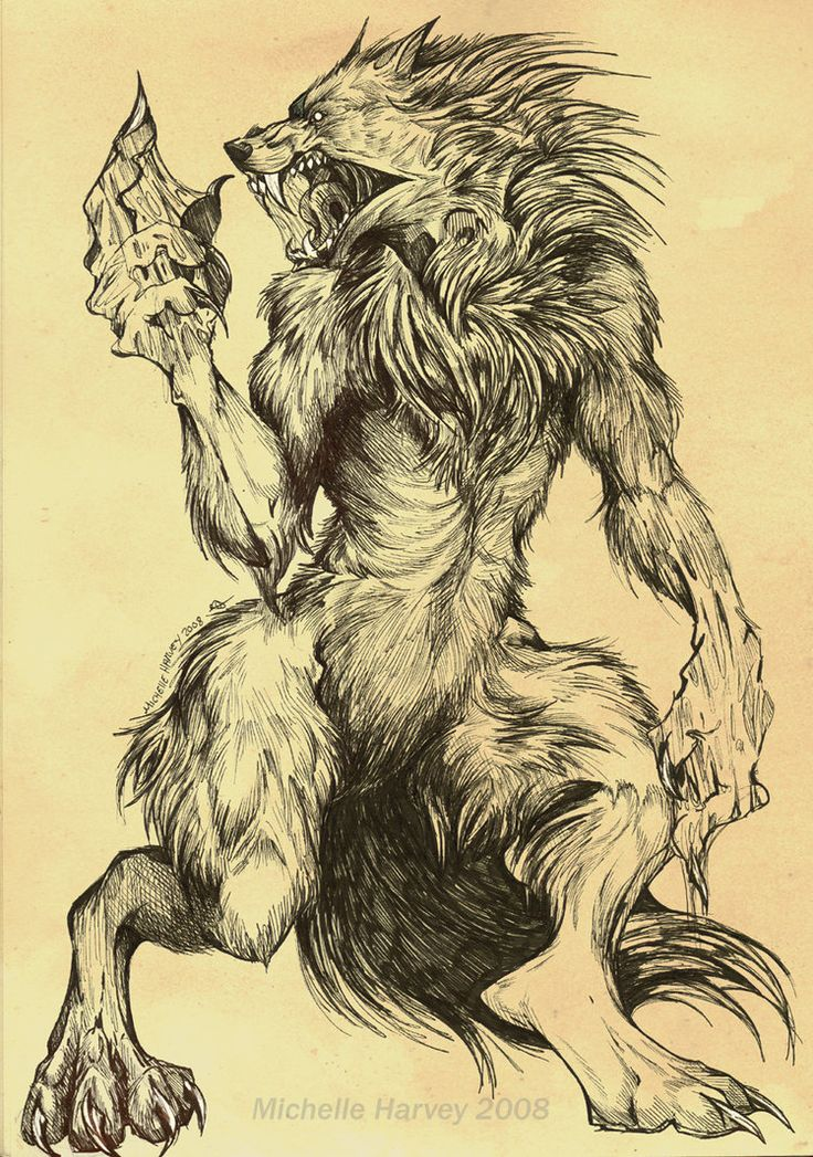 Drawn wolfman bear This * and Wolf *