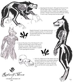 Drawn wolfman character development On (Creative Pin Werewolf more