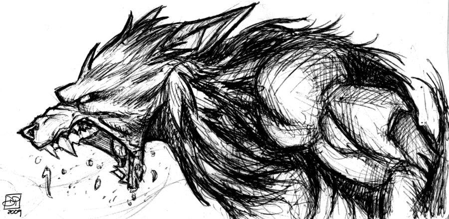 Drawn wolfman sketch Wolfman Drawing photo#27 drawing Wolfman