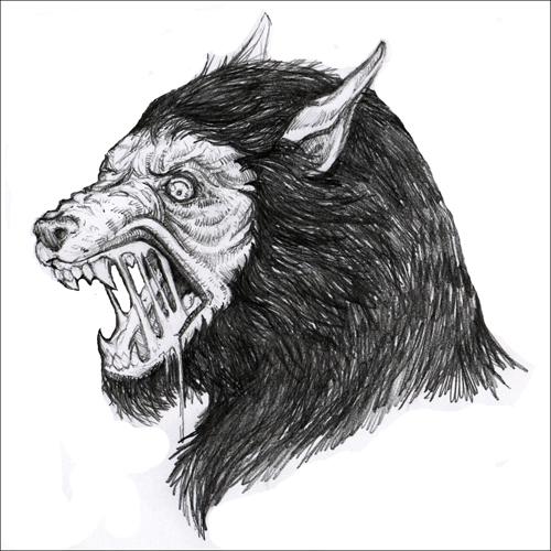 Drawn wolfman sketch Here's of sketch whiterabbitart werewolf