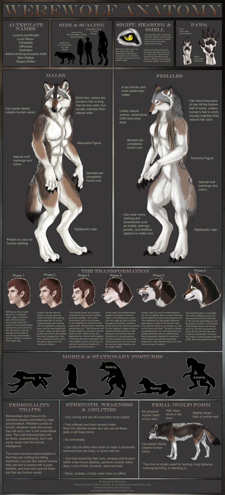 Drawn wolfman sugarpoultry Werewolf by sugarpoultry Anatomy by