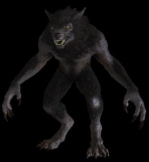 Drawn wolfman transparent From FANDOM (Skyrim) Scrolls Skyrim