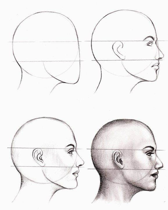Drawn profile beginner By Drawing Step Step and