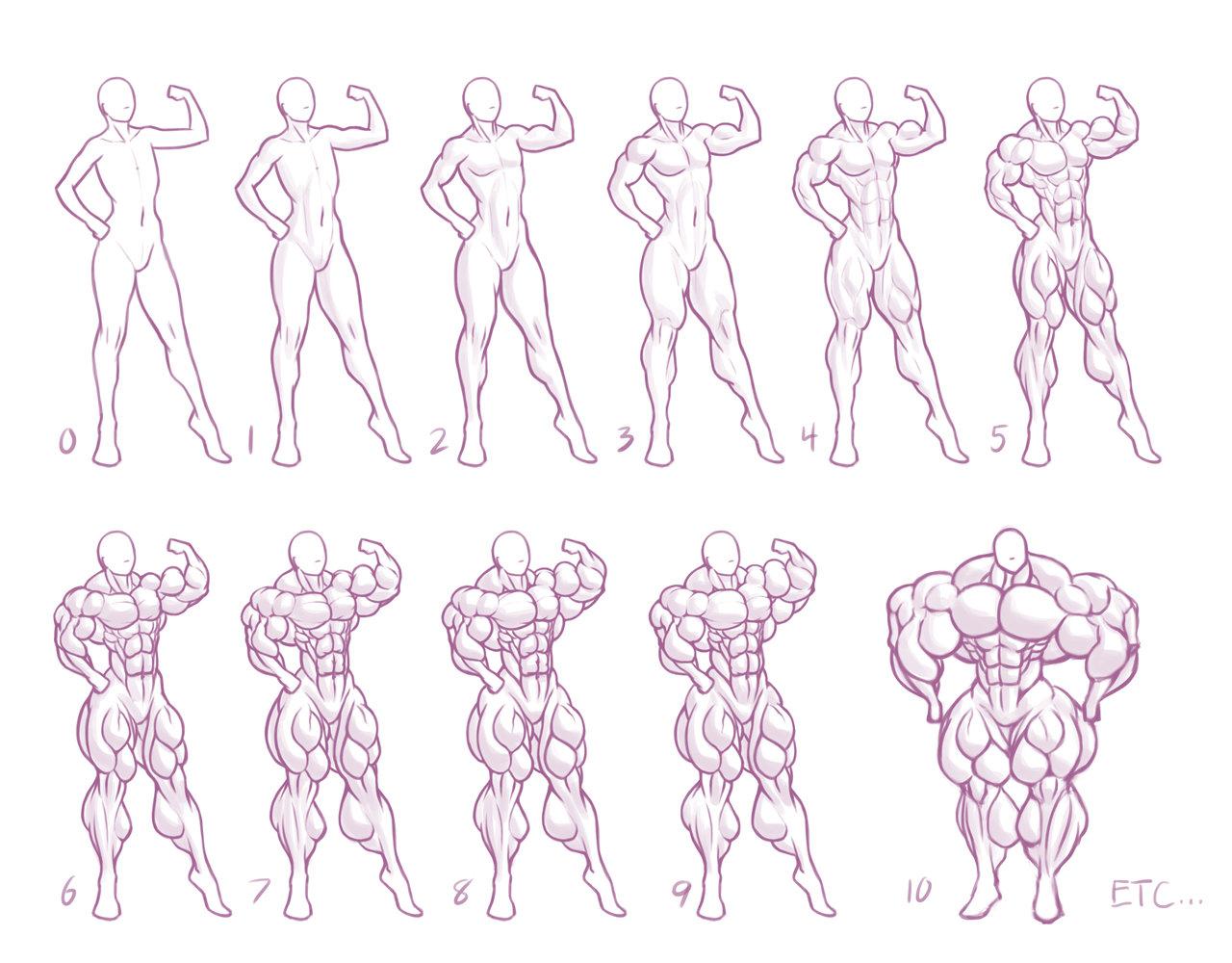 Drawn women muscular Muscular Anatomy Search Google Search