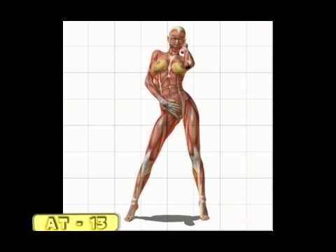 Drawn women muscular Female AVI Female muscle YouTube