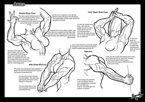 Drawn women muscular  images Figure Drawing /