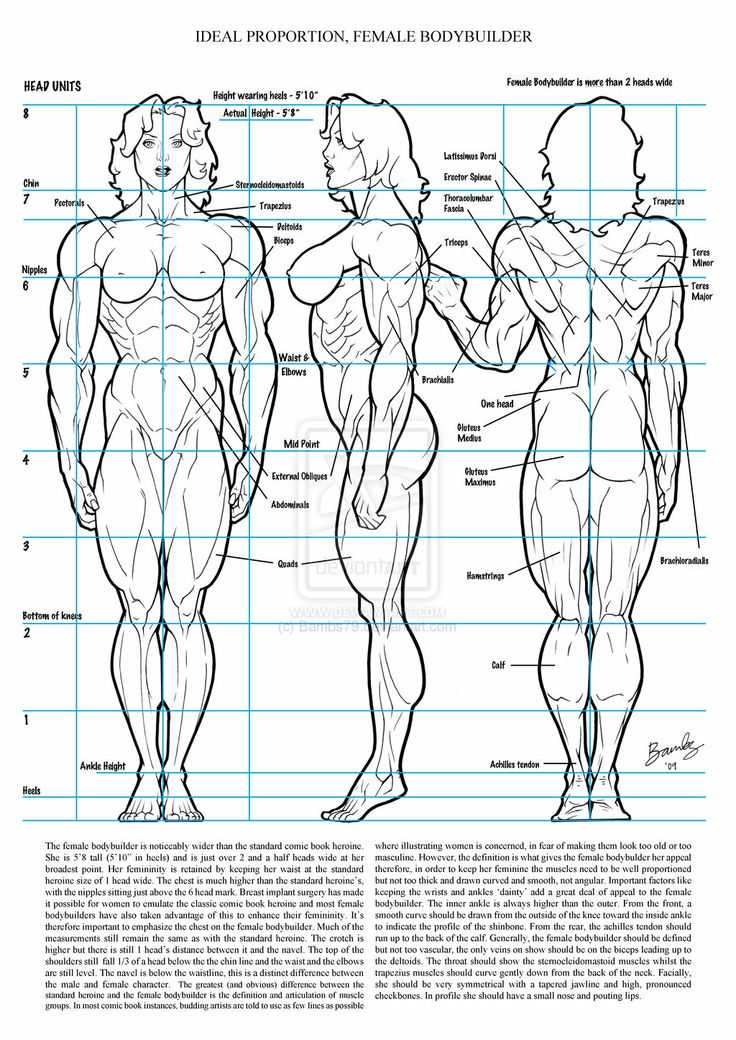 Drawn women muscular Female on figures Proportion 22