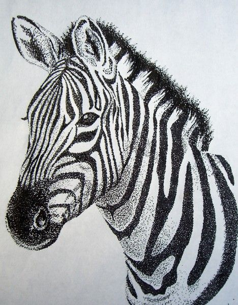 Drawn zebra By ArtWanted Odell on Zebra