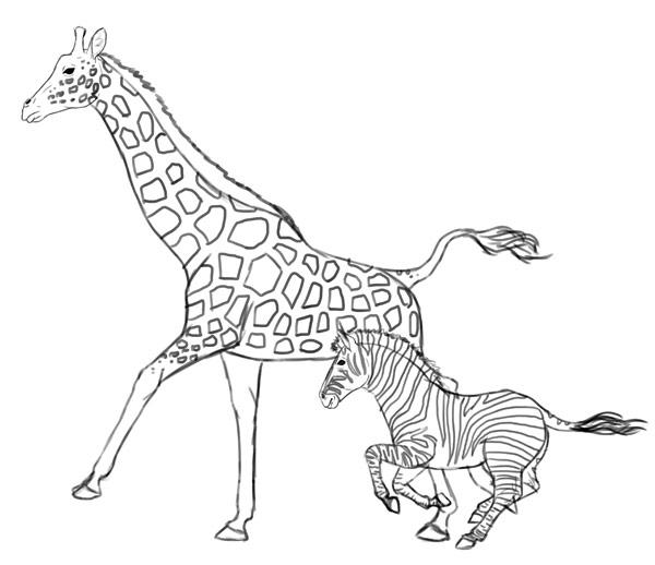 Drawn zebra Draw 12 giraffe Giraffes how