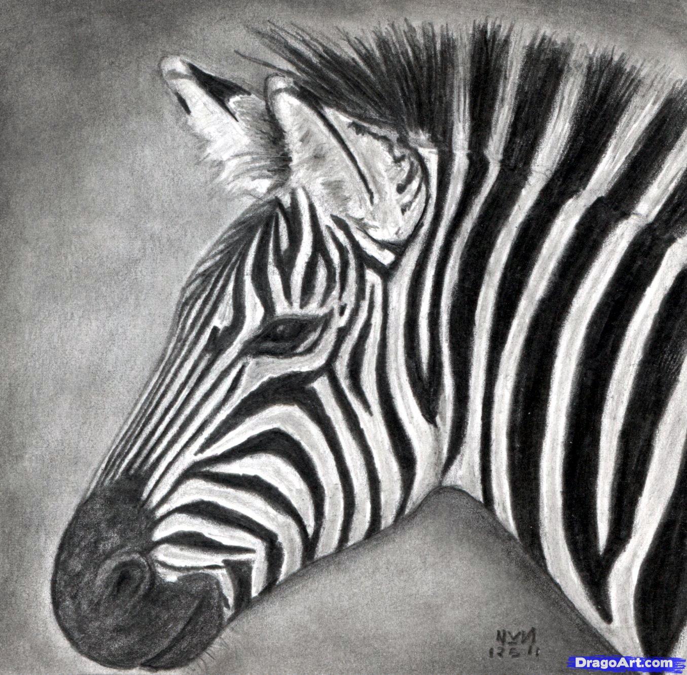 Drawn zebra A draw draw zebra a