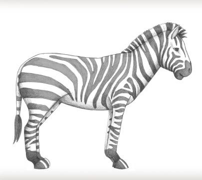 Drawn zebra #4