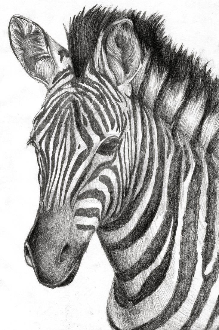Drawn zebra #6