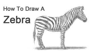 Drawn zebra #3