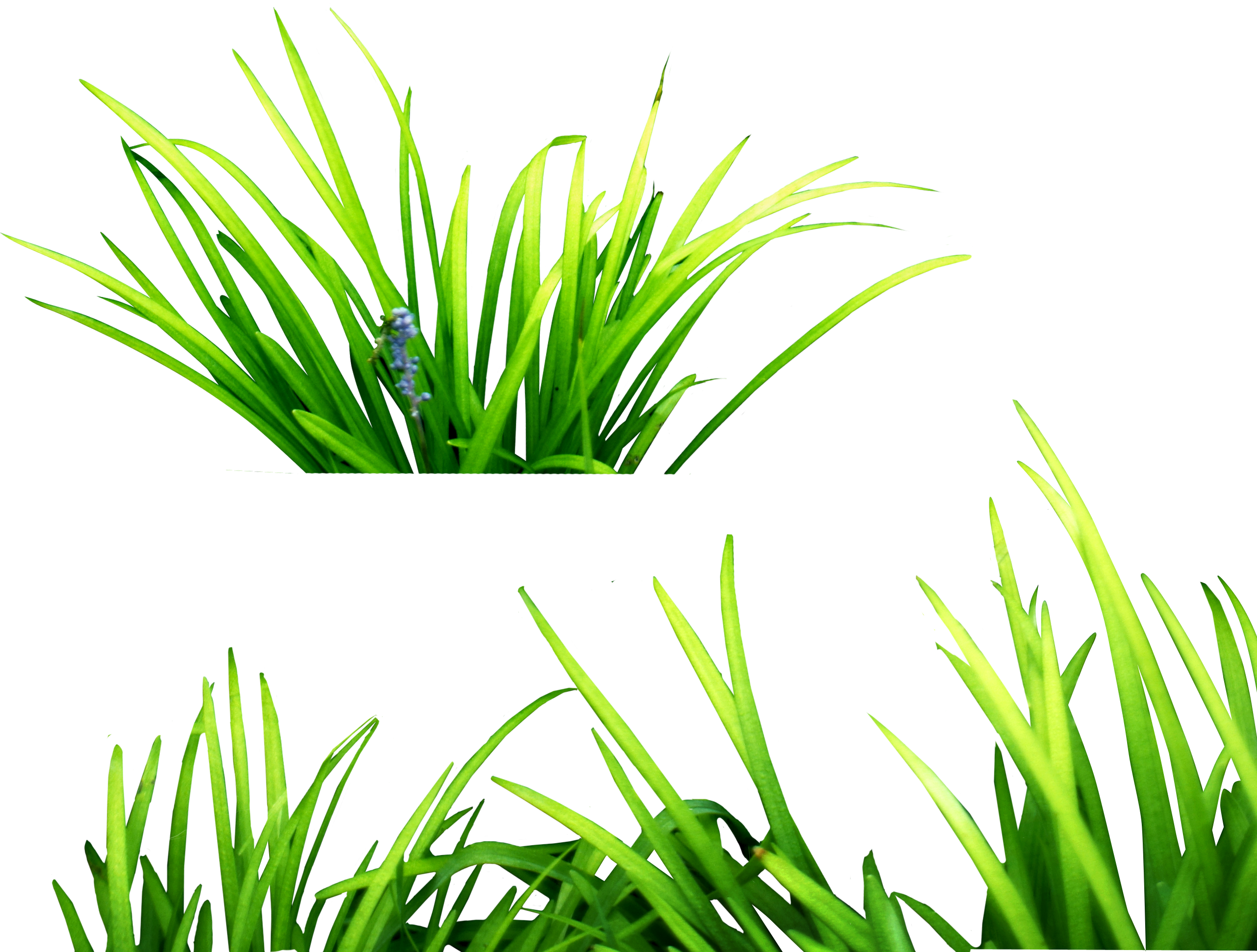 Dry Grass clipart #10