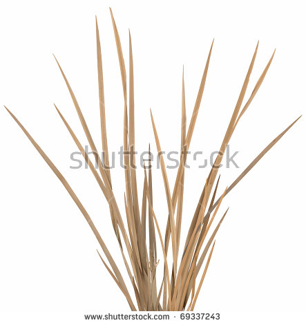 Dry Grass clipart #5