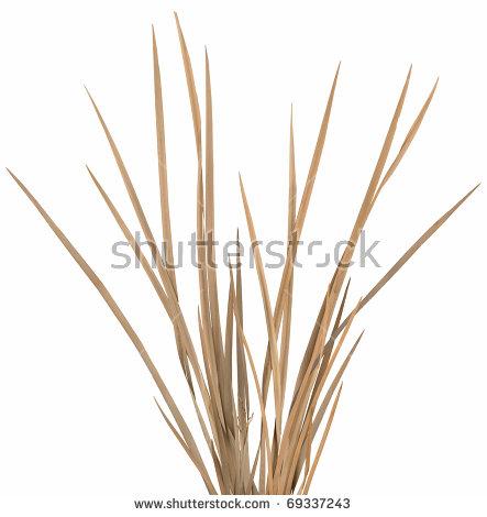 Dry Grass clipart Clipart Ornamental clipart Cliparts &