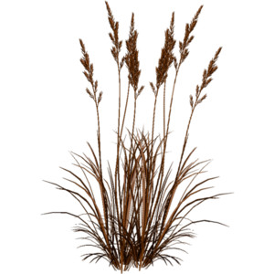 Dry Grass clipart #7