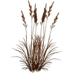 Dry Grass clipart Leaf GRASS Green grass Polyvore