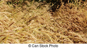 Dry Grass clipart #6