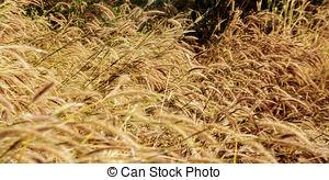 Dry Grass clipart Landscape in season for EPS