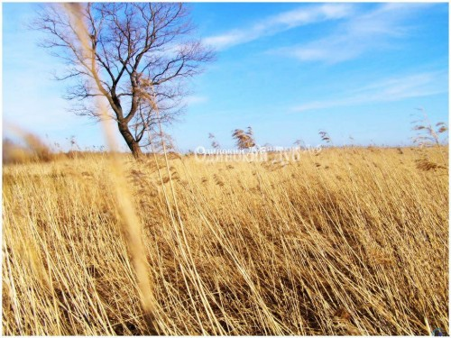 Dry Grass clipart #2