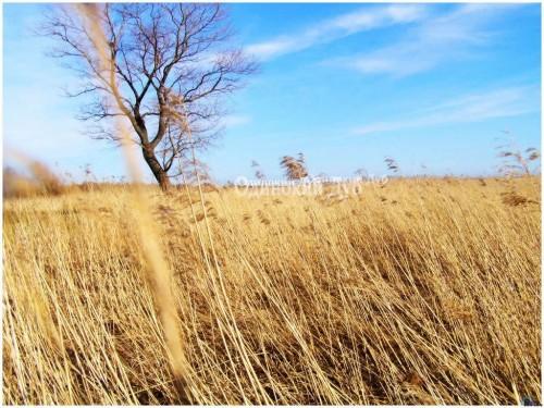 Dry Grass clipart Clip Art Grass – Clipart