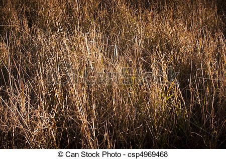 Dry Grass clipart #4