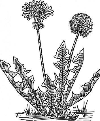 Dry Grass clipart Grass · Grass Art Vector