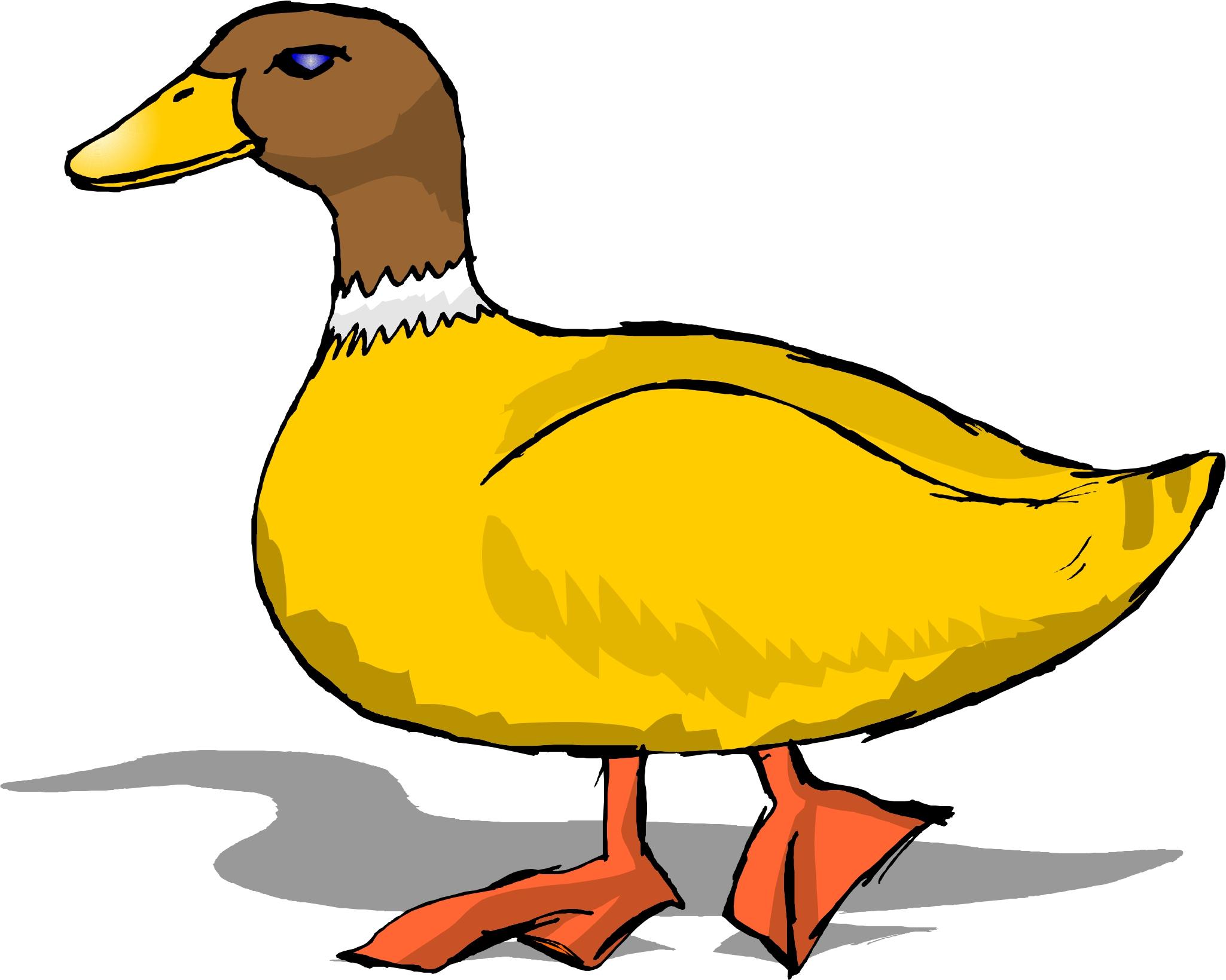 Duck clipart Cartoon image #11503 clipart Cartoon