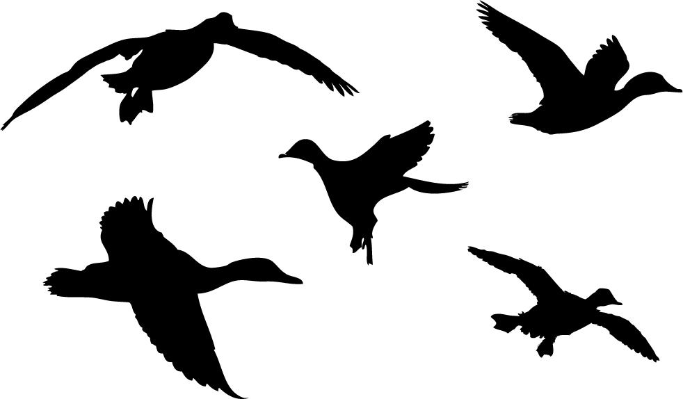 Hunting clipart waterfowl #5