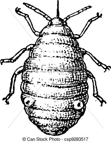 Dung Beetle clipart  Illustrations Aphids plant Art