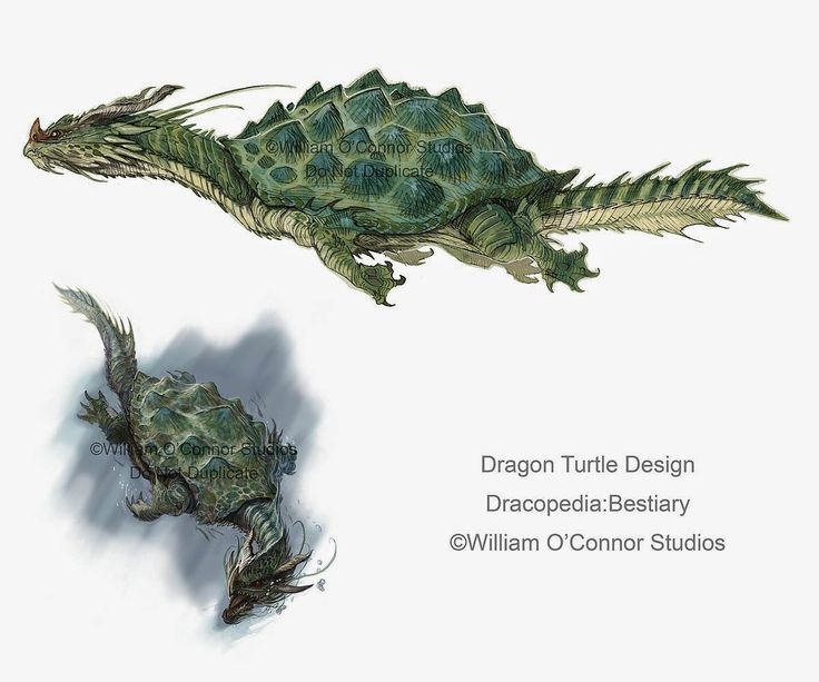 Dungeons & Dragons clipart dragon turtle #9