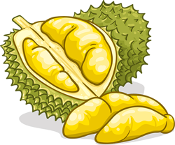Durian clipart star fruit Durians About Misconceptions All Quality