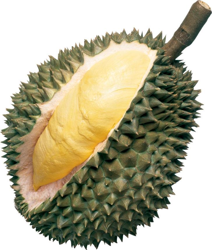 Durian clipart Durian clipartsgram Clipart Fruit Clipart