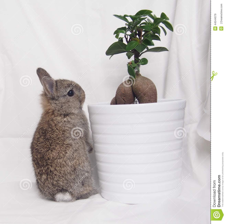 Dwarf clipart baby Dwarf Rabbit Netherland dwarf Of
