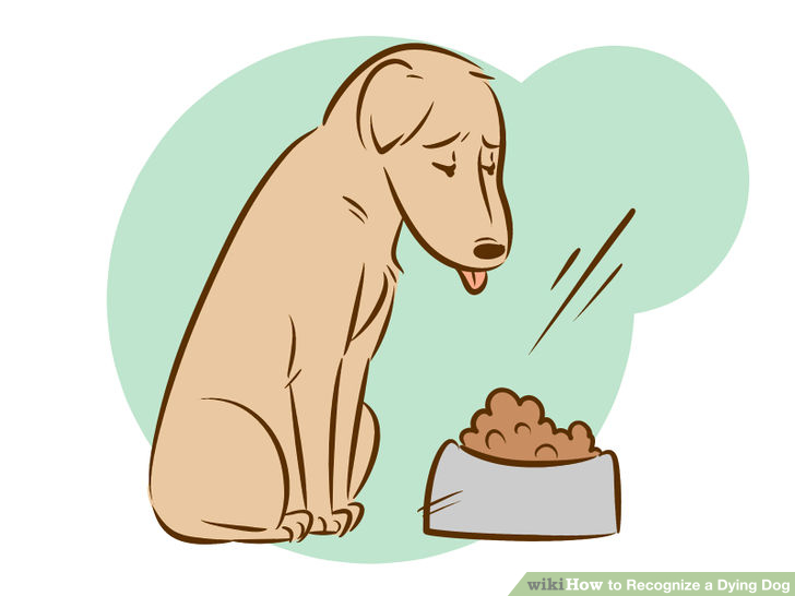 Dying clipart dog Breath for you Clipart best