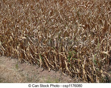 Dying clipart drought Csp1176080 Corn and Field Drought