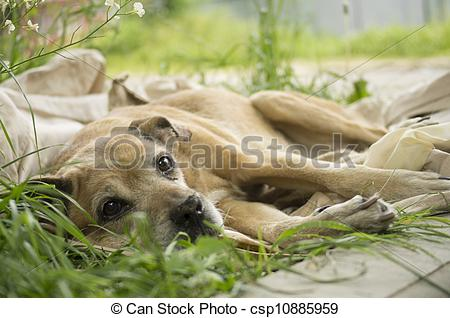 Dying clipart pet  lying dog on the