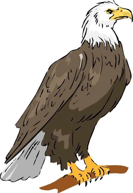Legs clipart eagle Image Free 84 Clipart Clipart