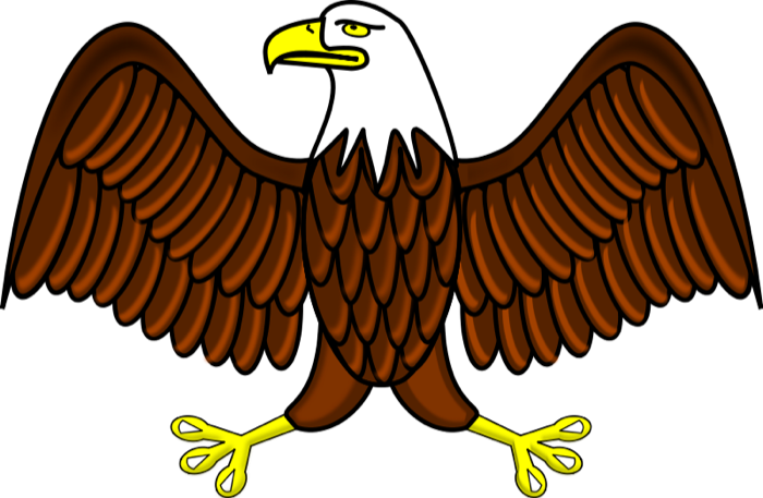 White-tailed Eagle clipart Graphics Eagle free of Clipartix