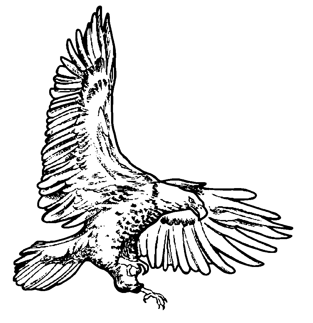 Eagle clipart line drawing Drawings eagle clip line Clip