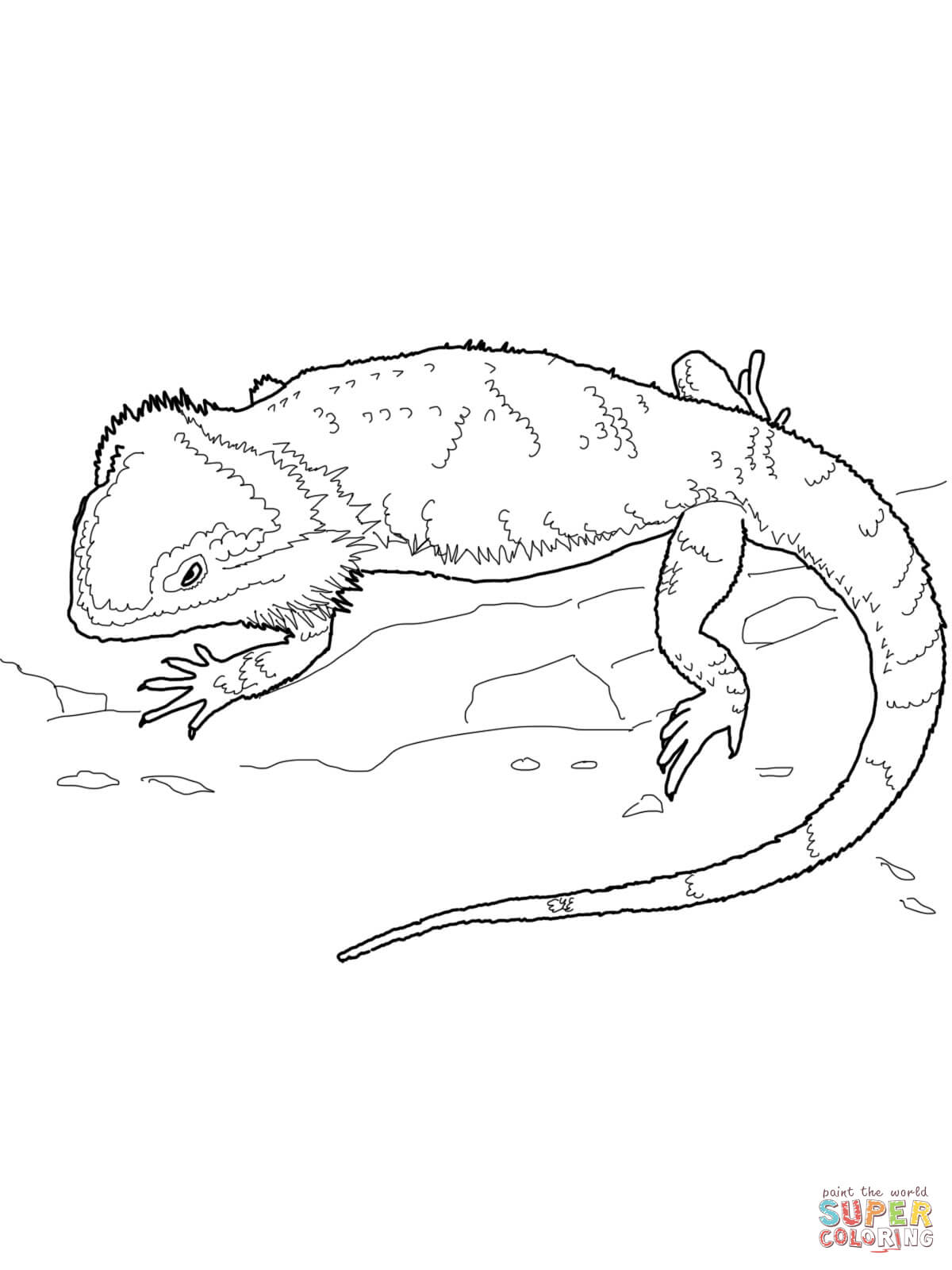 Eastern Water Dragon clipart Coloring Water Dragon Coloring Australian