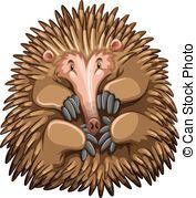Echidna clipart Cute  Echidna Illustrations and