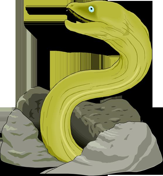Eel clipart #13